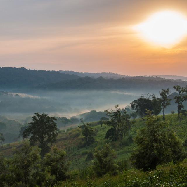 """""""Sunrise in Bwindi Impenetrable forest"""" stock image"""