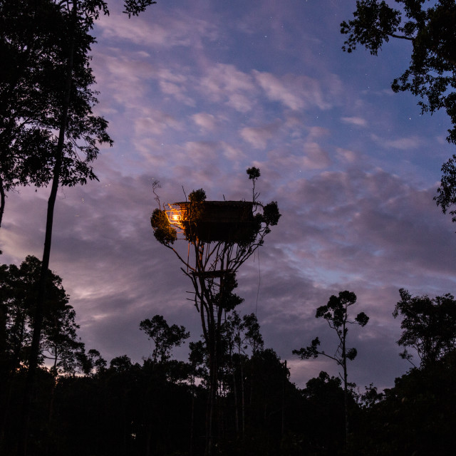 """Korowai house on the top of a tree"" stock image"