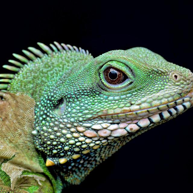 """Portrait of Green Dragon"" stock image"