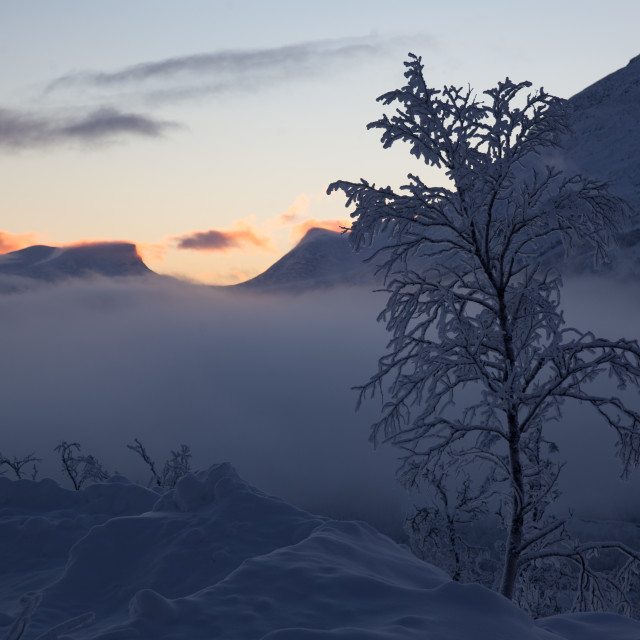 """""""Arctic Mist"""" stock image"""