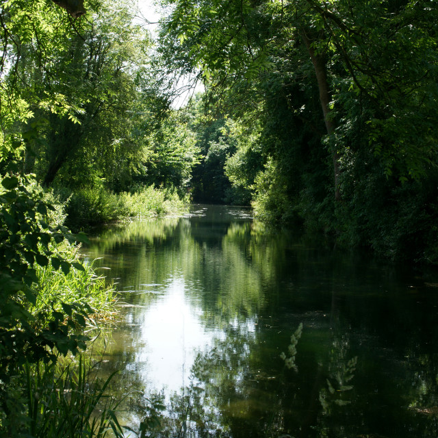 """Basingstoke Canal Canopy, Hampshire, UK"" stock image"