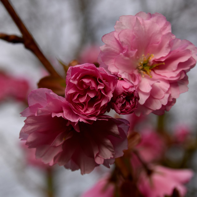 """""""Blossom in Spring"""" stock image"""