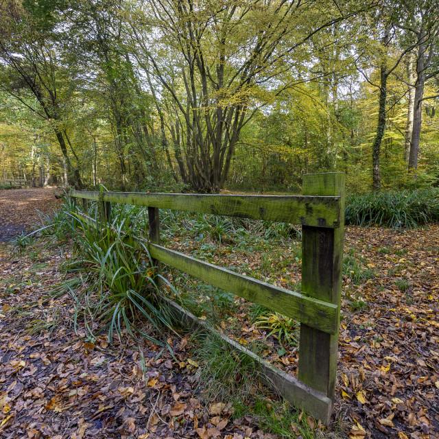 """""""Westwood Fence"""" stock image"""