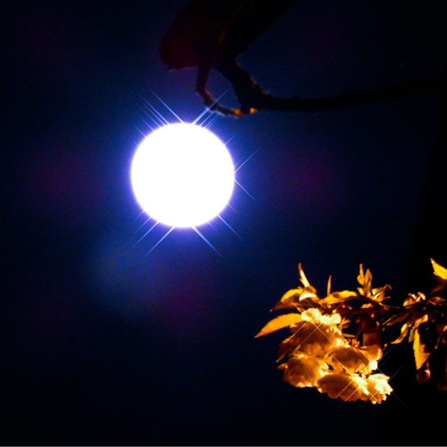 """Glittering full moon in tree"" stock image"