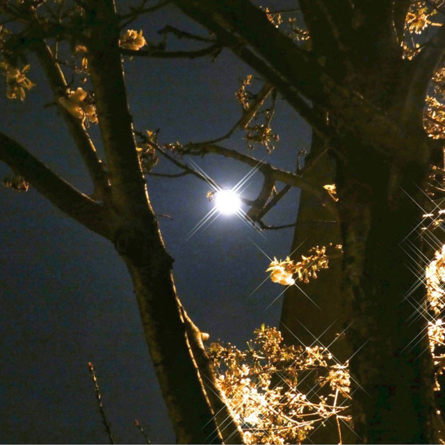 """Glittering full moon in tree"" stock image"