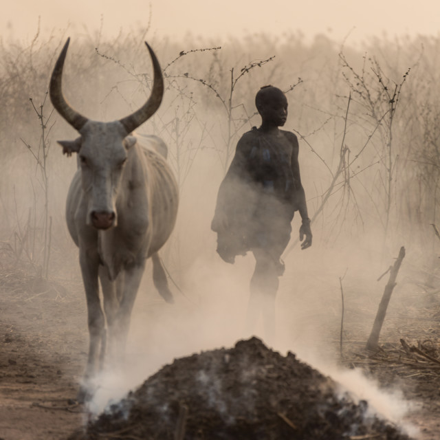 """Young Mundari with his cow"" stock image"