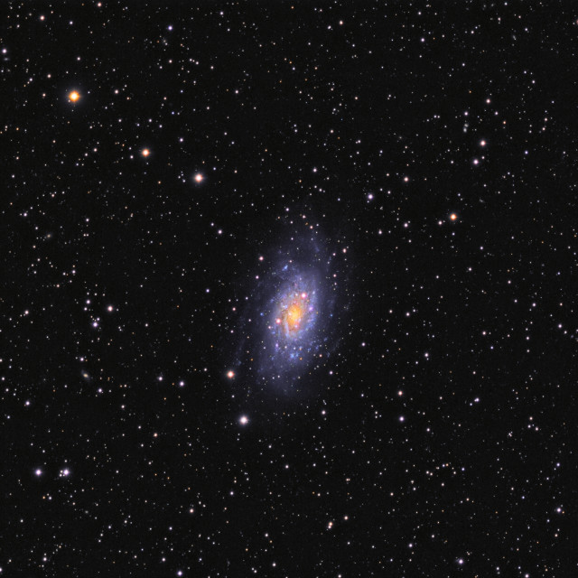 """""""Deep space object galaxy NGC 2403 in Camelopardalis constellation"""" stock image"""