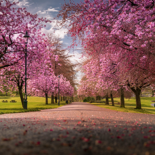 """""""Blossom in Dunfermline"""" stock image"""