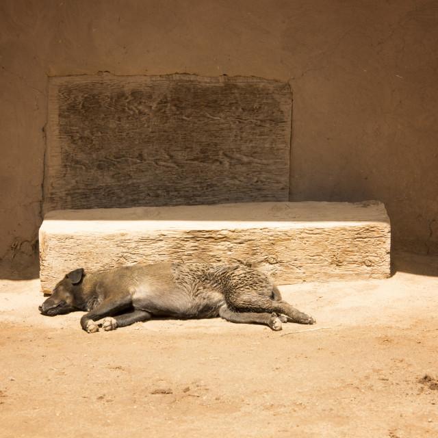 """A dog, sleeping in the sun"" stock image"