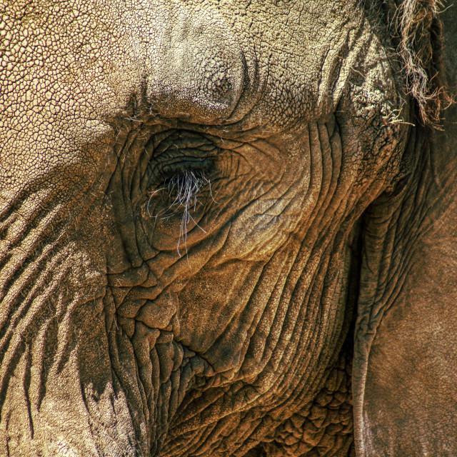 """The Elephant's Eye"" stock image"