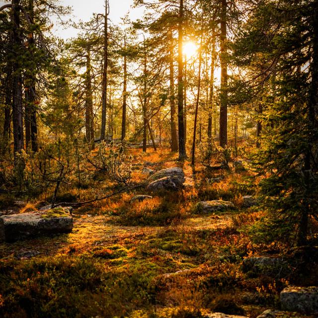 """A Scandinavian sunset"" stock image"