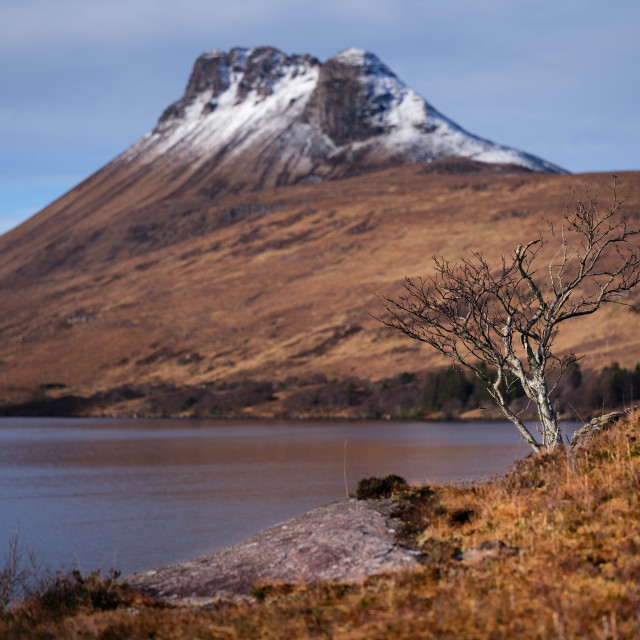 """Lone Tree at Loch Lurgainn"" stock image"