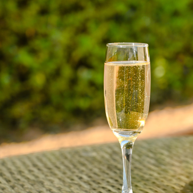 """Single flute glass of champagne on a glass table top"" stock image"