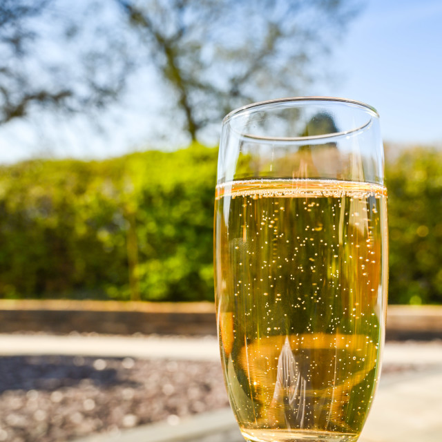 """Single flute glass of champagne being held up outdoors"" stock image"