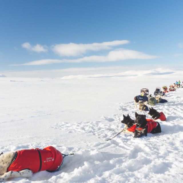 """Camp during my Arctic Expedition"" stock image"