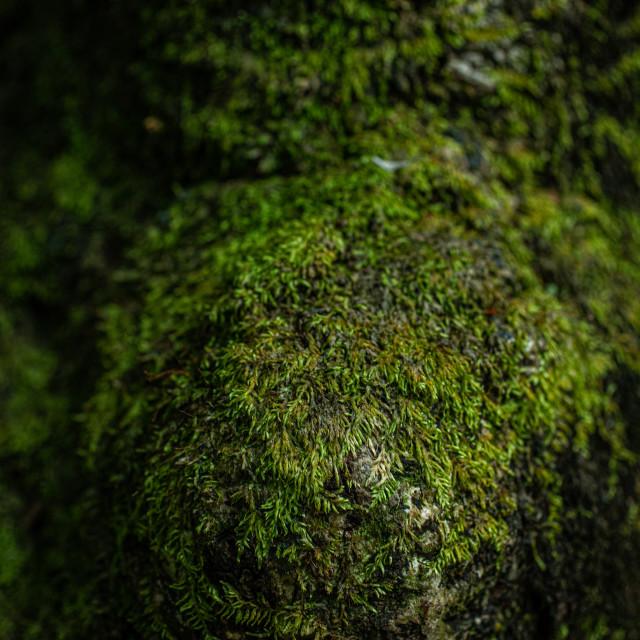 """Moss"" stock image"