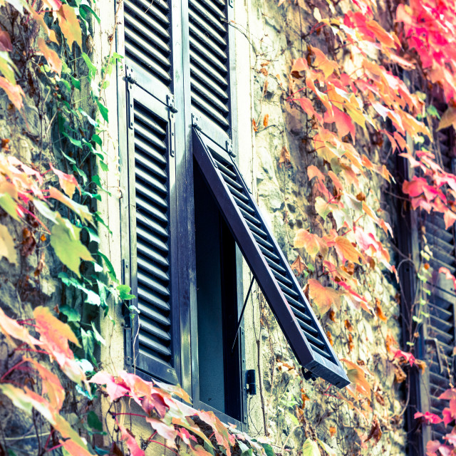 """""""Autumnal Shutters"""" stock image"""