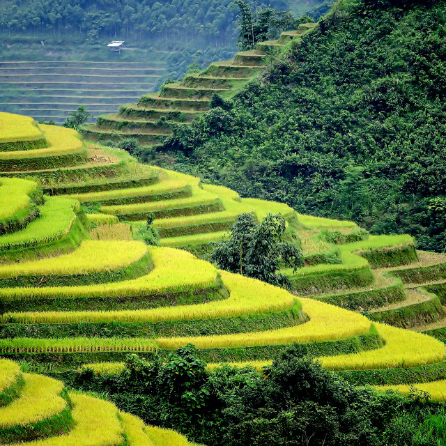 """Ban Phung Rice Terraces 01"" stock image"