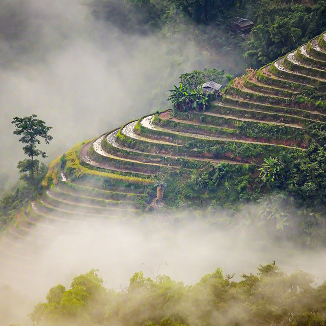 """Ban Phung Rice Terraces 02"" stock image"