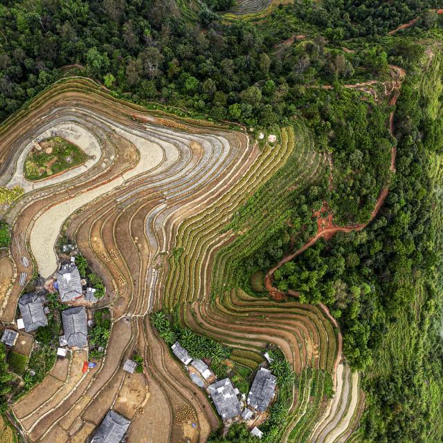 """Ban Phung Rice Terraces 03"" stock image"