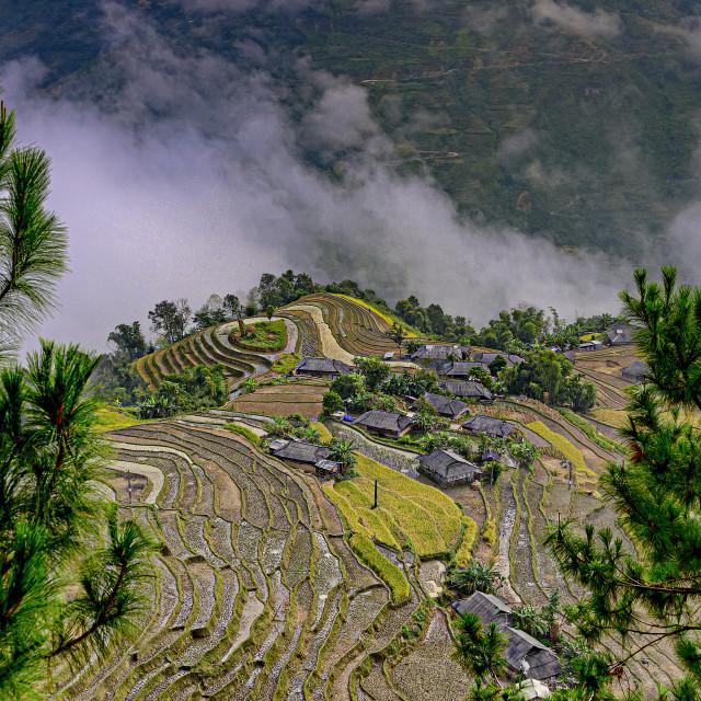"""Ban Phung Rice Terraces 04"" stock image"