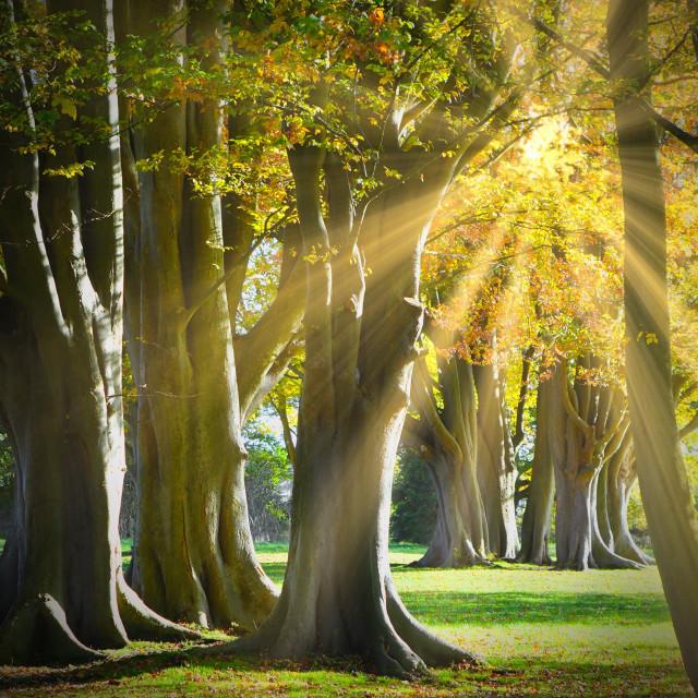 """""""Autumn Sunrays"""" stock image"""