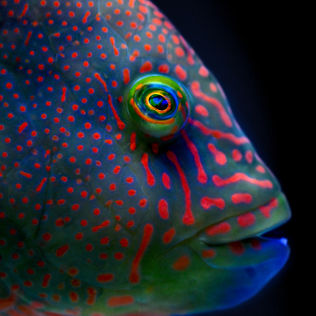 """Colourful Fish 01"" stock image"