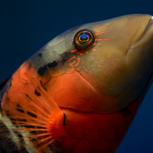 """Colourful Fish 02"" stock image"