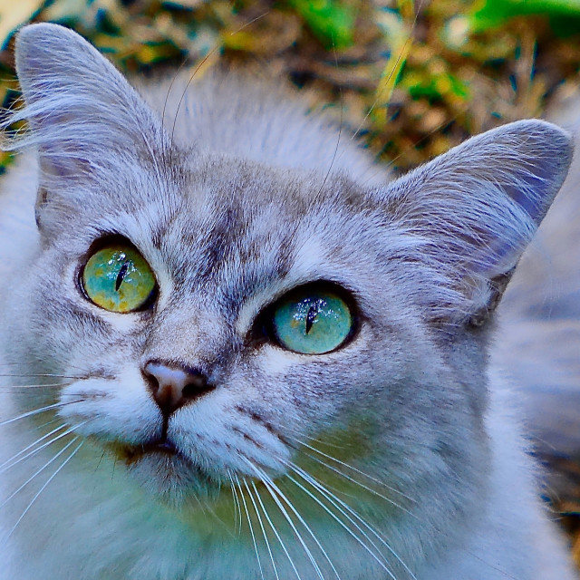 """""""Cat With Big Eyes"""" stock image"""