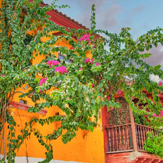 """""""Bougainvillea Growing on Side of Colorful Building"""" stock image"""