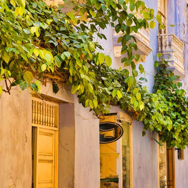 """Tropical Vines Growing Above Doorways"" stock image"