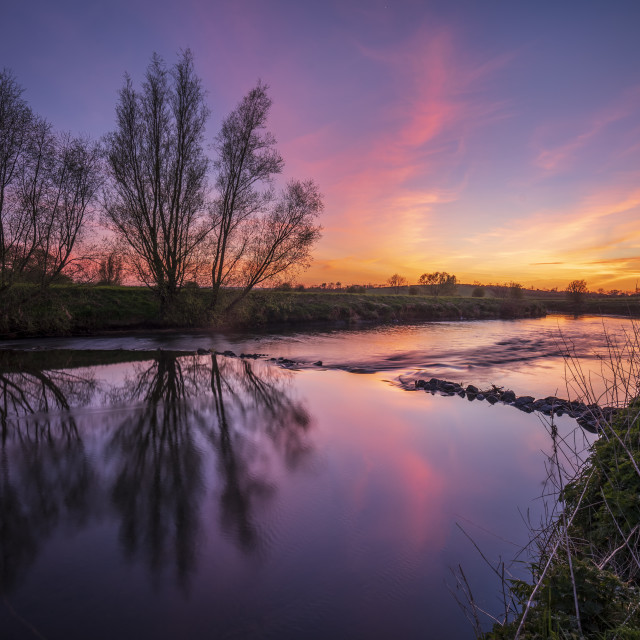 """""""Sunset Willows"""" stock image"""