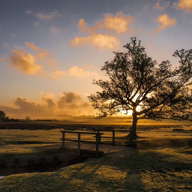 """Dawn at Longwater Lawn"" stock image"