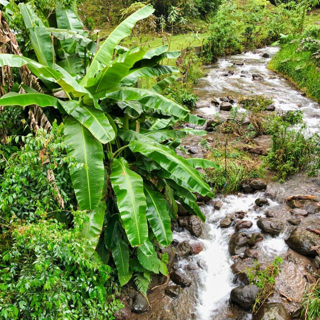 """Tropical Stream"" stock image"