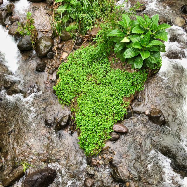"""""""Tropical Foliage Growing In A Stream"""" stock image"""