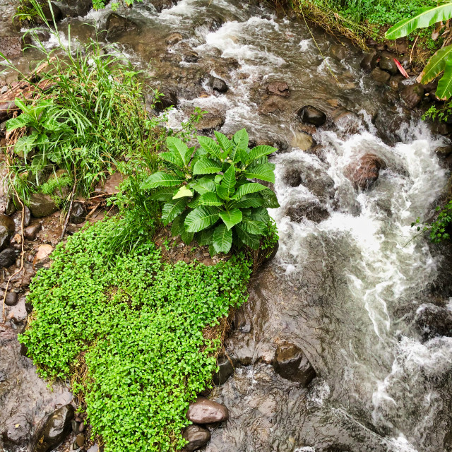 """""""Andes Mountain Stream"""" stock image"""