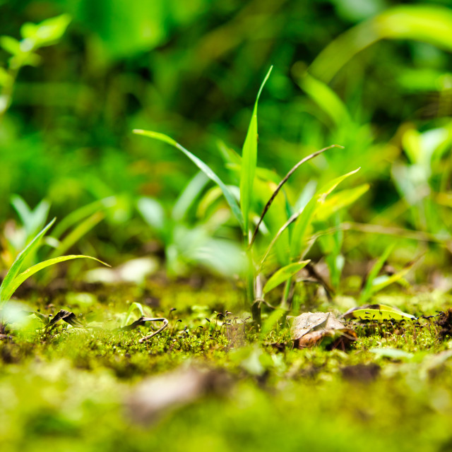 """""""New Tropical Jungle Growth"""" stock image"""