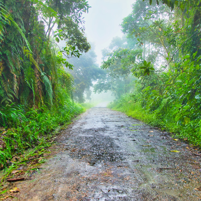 """""""Andes Mountains Jungle Road"""" stock image"""