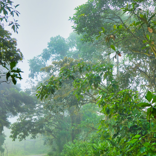 """""""Mist in Tropical Trees"""" stock image"""