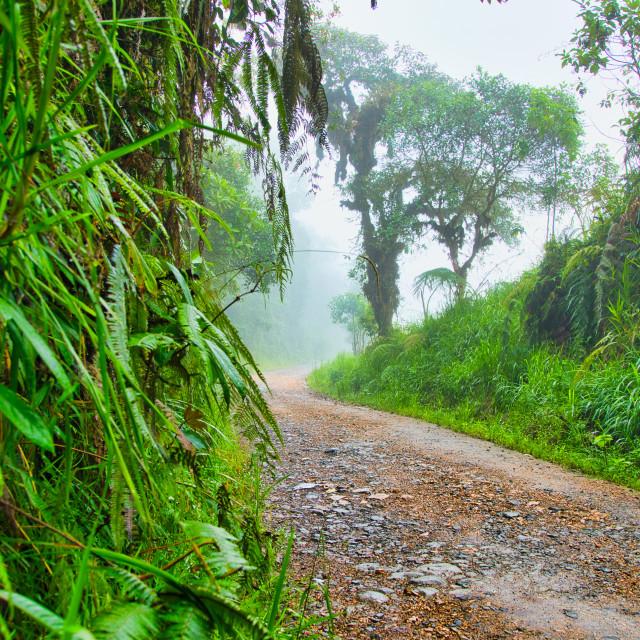 """Andes Mountain Road in Ecuador"" stock image"
