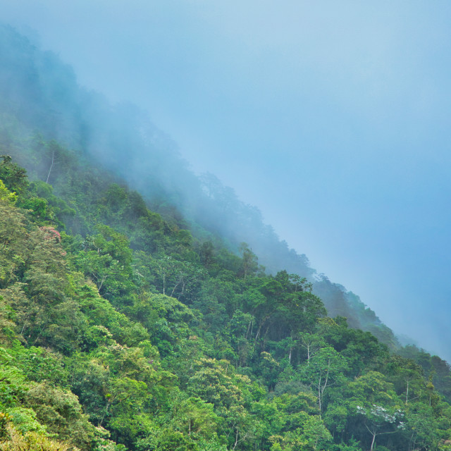 """""""Afternoon Fog in the Andes Mountains"""" stock image"""