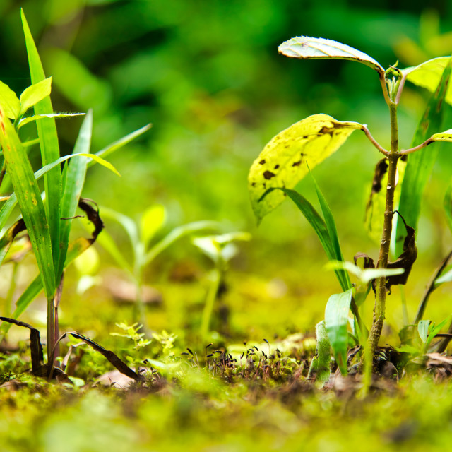 """""""New Tropical Plant Growth"""" stock image"""