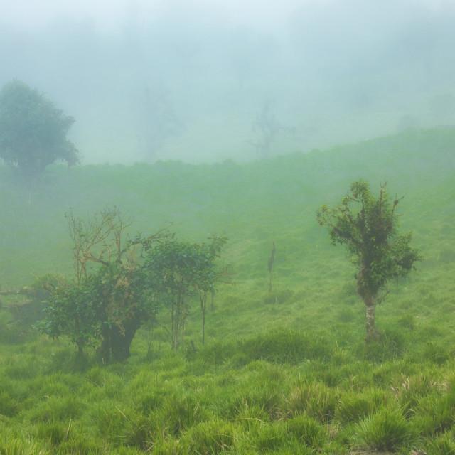 """Cloud Forest Landscape"" stock image"