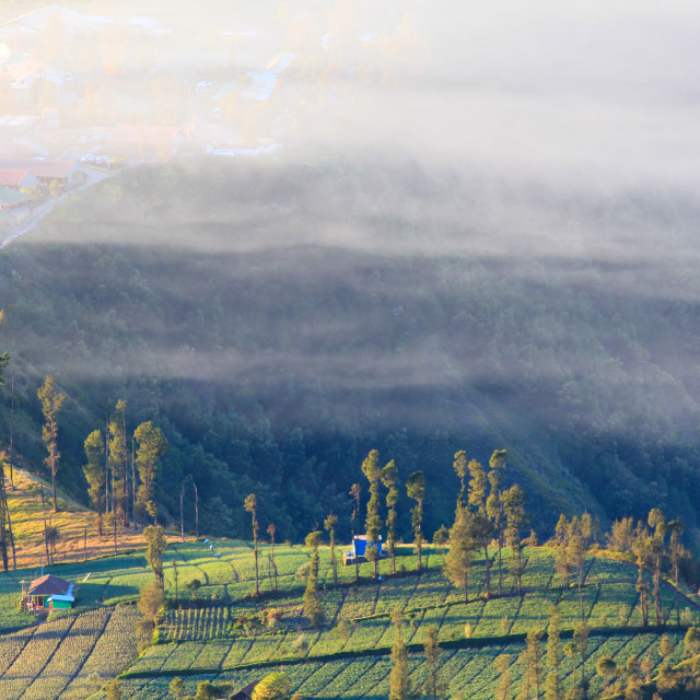 """""""cemoro lawang at dawn with mist"""" stock image"""