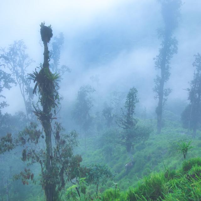 """Foggy Tropics"" stock image"