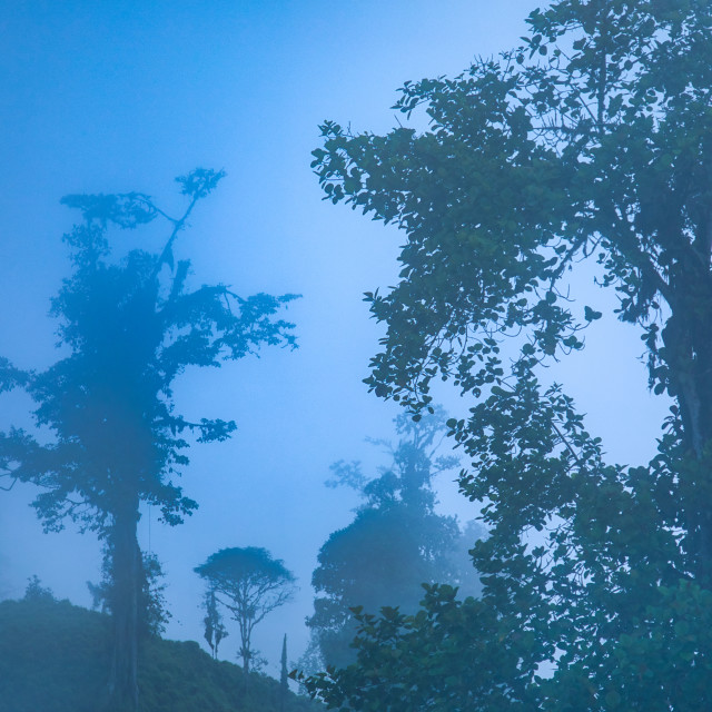 """""""Foggy Tropical Scene in the Andes"""" stock image"""
