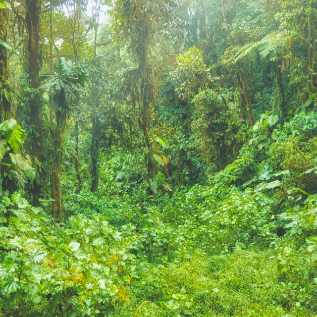 """""""Tropical Jungle in the Andes"""" stock image"""