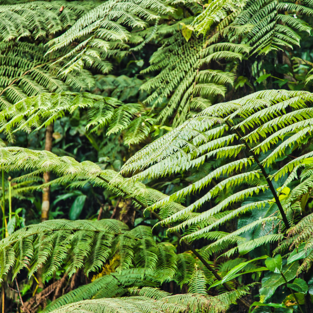 """""""Close-Up Of Fern Growing Wild"""" stock image"""