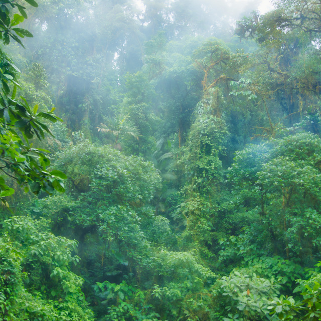 """Lush Green Tropical Rainforest"" stock image"