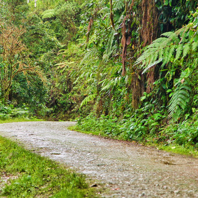 """""""Road to Tropical Paradise"""" stock image"""